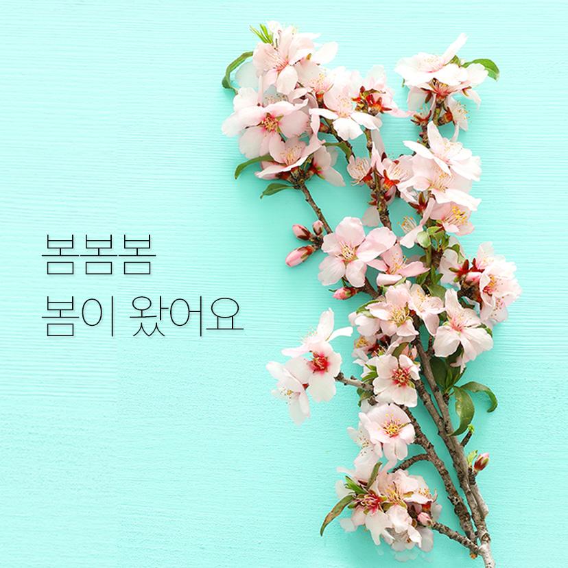 롯데백화점 40주년 기념 벚꽃 안내서