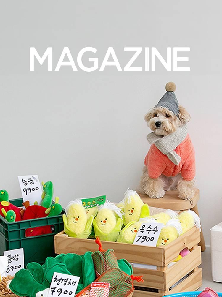 우리집 댕댕이를 위한 강아지 용품 BEST 6