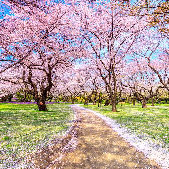 [3층 더웨이브] 벚꽃을 「잇다」 플리마켓