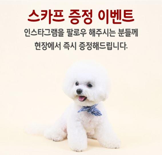[다솜] 강아지 스카프 증정